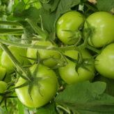 PyroAg – Naturally Better Farming